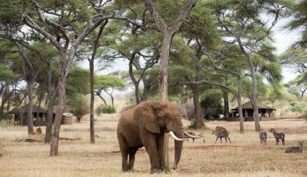 luxury-lodge-Tanzania-Swala-04-2